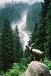 Tyrol et Salzbourg